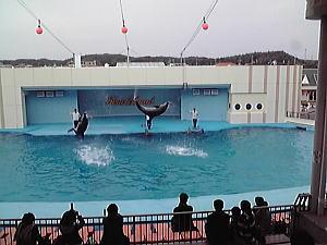 南知多ビーチランド<イルカのジャンプ>